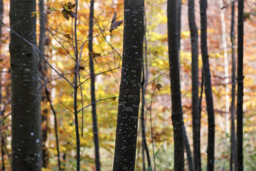 Haunstetter Wald Augsburg