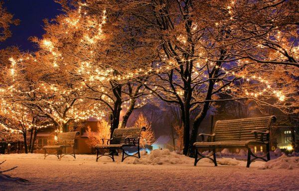 Mit Lichtern geschmückte Bäume im Winter