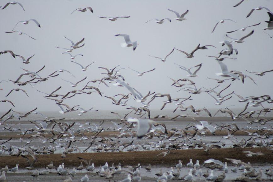 Vögel Loiremündung