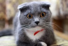 Katze entsetzt