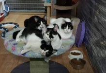 Chats dans un refuge