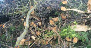 Abattage arbres Brétignolles port