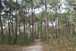 Wald bei La Turballe