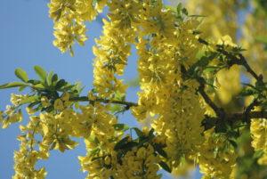 Frühling in Frankreich während Corona