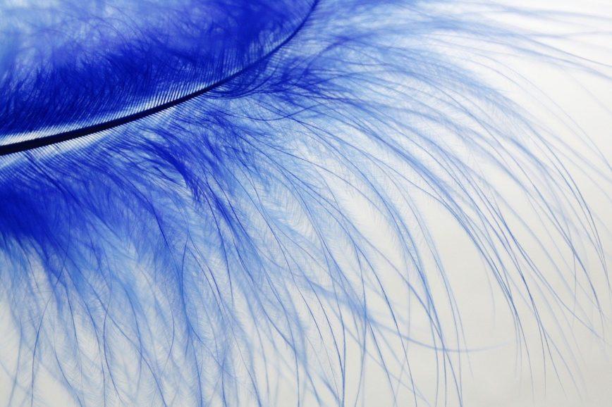 Blaue Vogelfeder